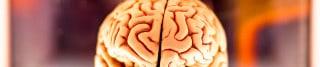 Dale diariamente nueva información a tu cerebro y haz tus días más largos